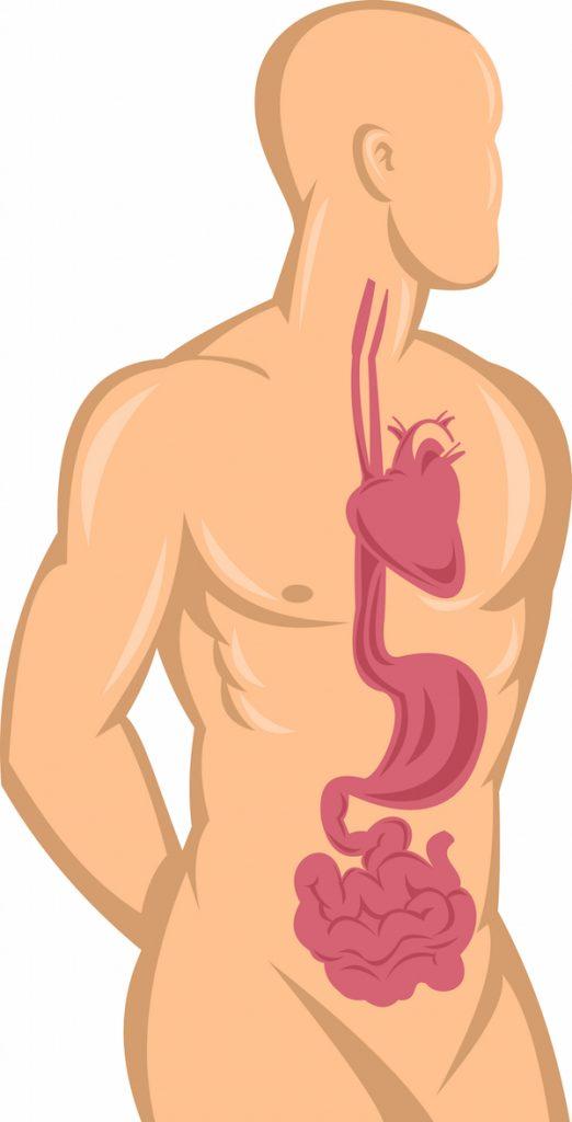 Gastroparesis-Diet